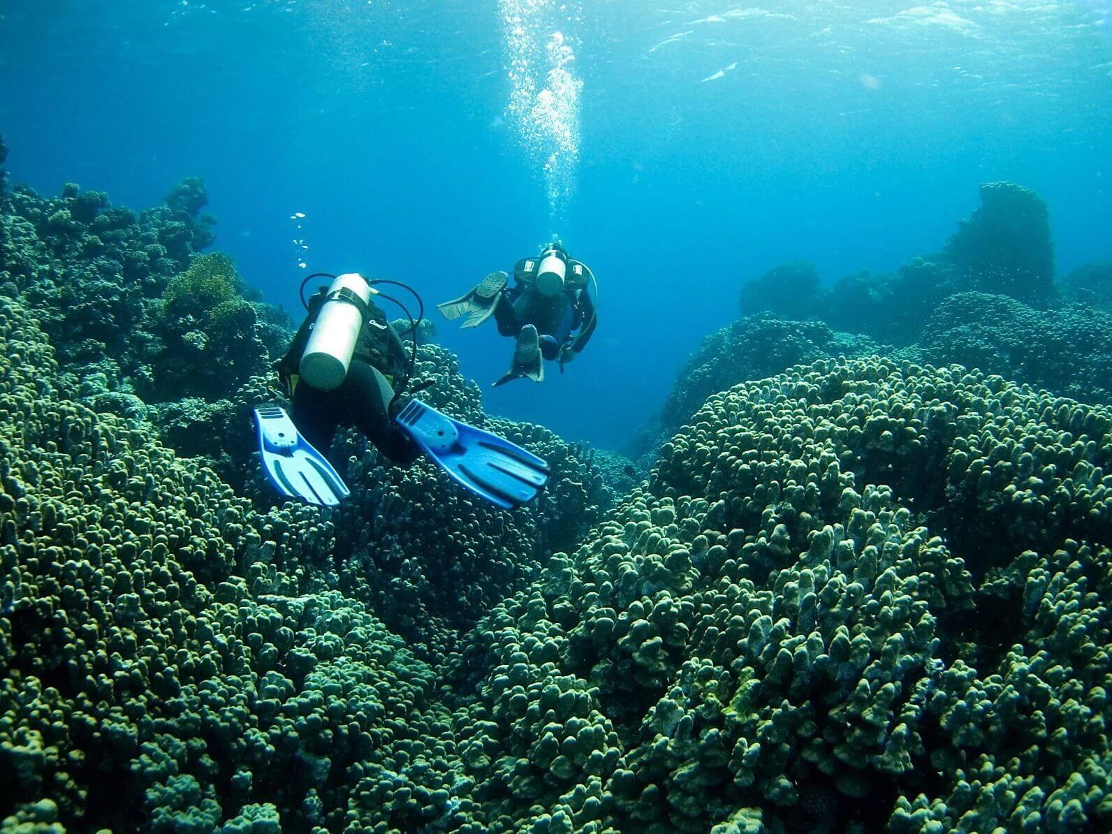 Guardian Memorial Reefs